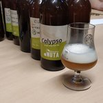 10x10 Single Hop Calypso from Browar Nuta - domowy